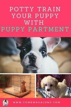 Potty Train Your Puppy With Puppy Apartment Training Your Puppy