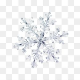 Winter Png Winter Transparent Clipart Free Download Winter Clothes Clipart Winter Sport Clip Art White Flower Png White Flowers Snowflakes