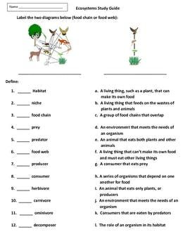 Food Chains, Food Webs, and Ecosystems Activities and Test