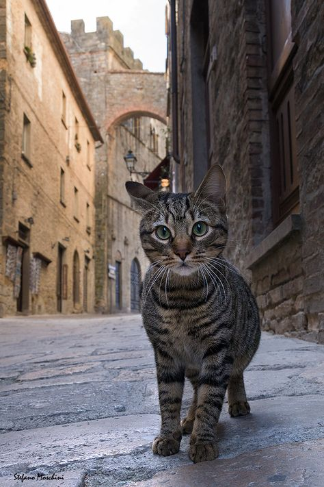 Volterra, Italy, Photograph Curious cat by Stefano Moschini Pisa Tuscany