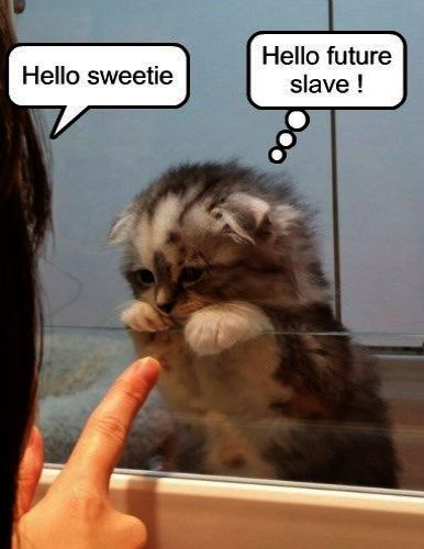 Cats And Kittens Gumtree Ni Cats And Kittens On Pinterest Funny Animal Jokes Kittens Funny Funny Animals