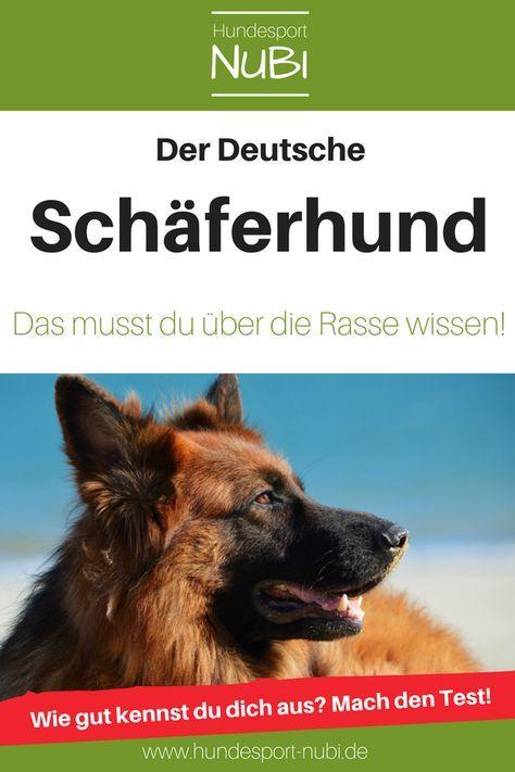 Lustige Und Susse Deutsche Schaferhund Welpen Zusammenstellung 1 So Suss Lustige Und Su In 2020 Cute German Shepherd Puppies Shepherd Puppies German Shepherd Puppies