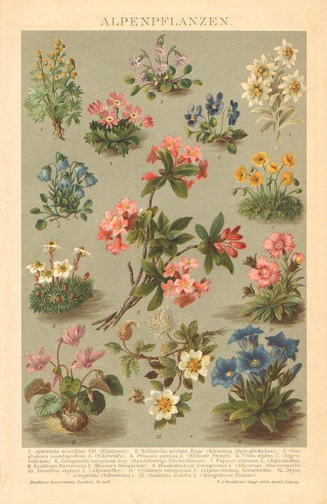 7 best edelweiss images  dirndl german decor needle thread