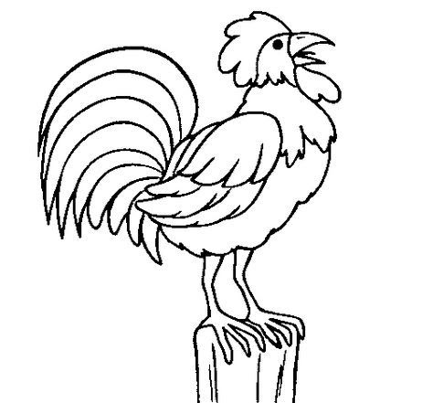 Menakjubkan 30 Gambar Kartun Ayam Jantan Di 2020 Dengan Gambar