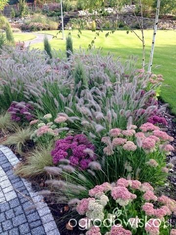 Fabulous mix of ornamental grasses and other perennials.- Fabulous mix of ornamental grasses and other perennials. Fabulous mix of ornamental grasses and other perennials. Ornamental Grass Landscape, Ornamental Grasses, Flower Landscape, Abstract Landscape, Landscape Edging, Low Maintenance Landscaping, Yard Maintenance, Front Yard Landscaping, Landscaping Ideas