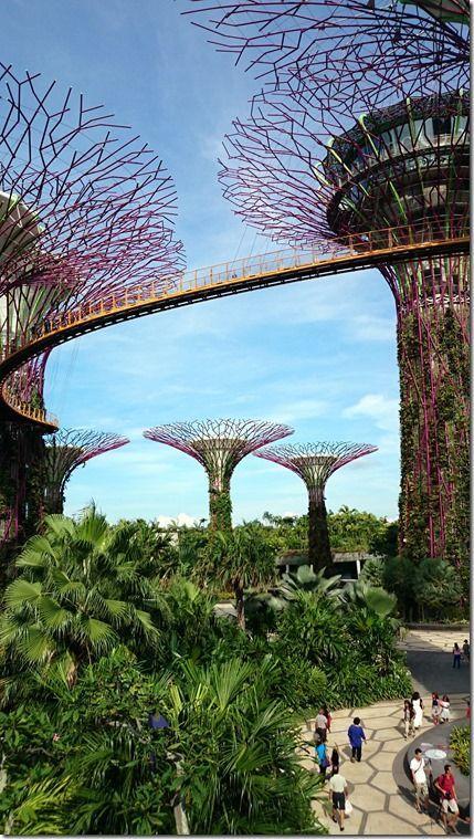 b7be81de45bf05e5a611dd1994a91e7b - Supertree Grove Gardens By The Bay Singapore