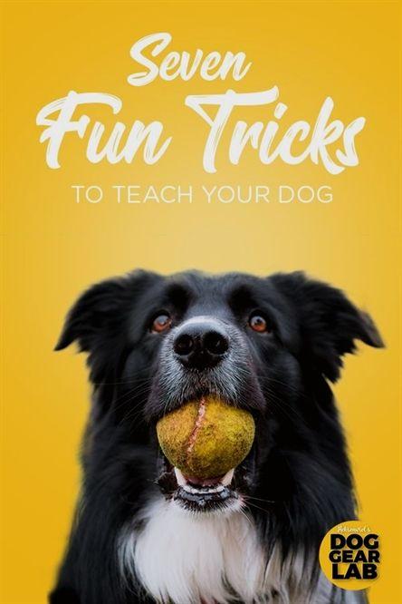 Dog Training E Collar Bow Wow Dog Training Zanesville Ohio Dog