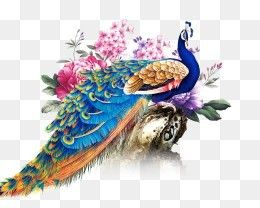 Free Download Chinese Style Peacock Png Image Iccpic Iccpic Com Feather Drawing Peacock Art Free Watercolor Flowers
