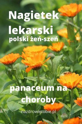 Kwiaty Nagietka Lekarskiego Wykazuja Dosc Silne Dzialania Przeciwbakteryjne Bakteriobojcze Antybakteryjne Przeciww Natural Medicine Magic Herbs Herbalism