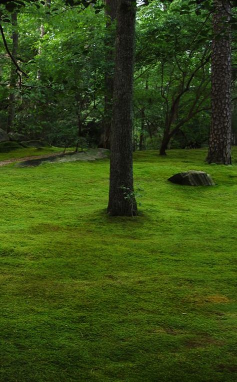 How To Grow Moss Moss And Stone Gardens Blog Best Detailed Info Do Not Use Buttermilk Or Beer Garden Stones Growing Moss Woodland Garden