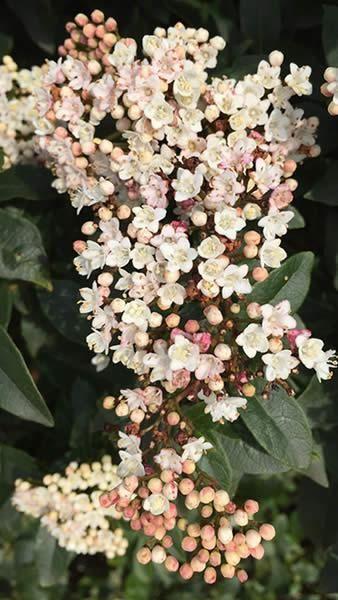 b7d3092d629e6bab721ccec229776149 - Winter Flowering Shrubs For Small Gardens