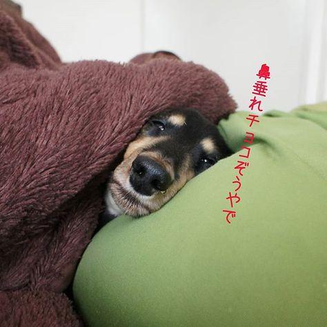 dogphotography キラリと光る水滴。 #犬 #愛犬 #ミニチュアダックスフンド...