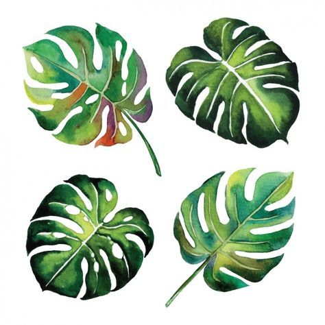 Download Watercolor Leaves Design For Free Painted Leaves