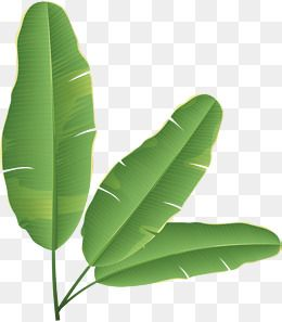 Banana Leaves Rainforest Plant Png Transparent Clipart Image And Psd File For Free Download Banana Leaf Plants Banana