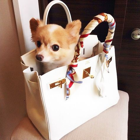 d1066c96f6d2 Chihuahua and Birkin and Louis Vuitton charm