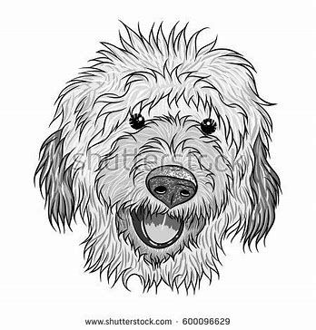 Image Result For Labradoodle Dog Coloring Pages Dog Coloring