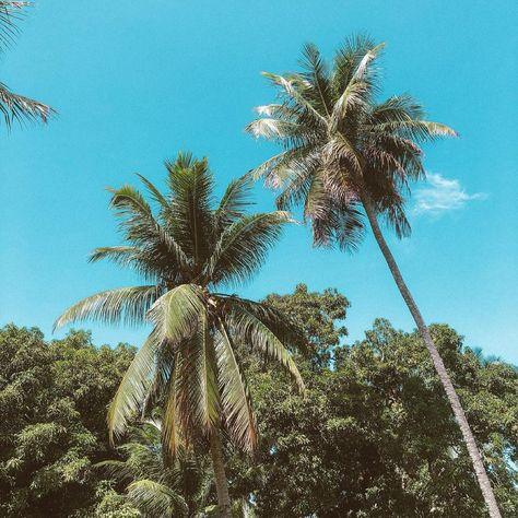 "Danielle S. Castilho on Instagram: ""🌴 . . . . . . . . . . . #maceió #fotorespiro #foto #fotografia #paisagem #natureza #coqueiral #fotododia"""