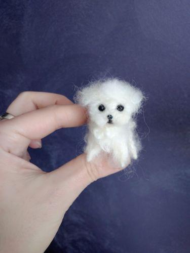Ooak Needle Felted Miniature Maltese Poodle Puppy Dog Maltese