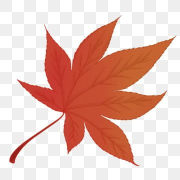 Hand Drawn Autumn Winter Maple Red Leaves Beautiful Red Maple Leaf Maple Branch Maple Leaf Clipart Red Autumn Leaves Cartoon Red Maple Leaf Png Transparent C Maple Leaf Clipart Leaf Clipart