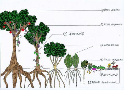 Vers La Foret Comestible Avec Images Jardin Foret Jardin
