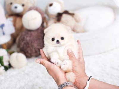 All Puppies For Sale Cute Teacup Puppies Puppies Teacup Puppy Breeds