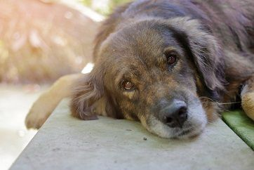 Pin On Pet Loss Grief