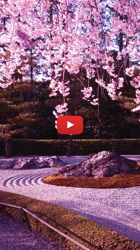Cherry Blossom Background Wallpapers Pink Japanese Sakura Wallpaper Sakura Garden Wallpa Cherry Blossom Background Cherry Blossom Wallpaper Live Wallpapers