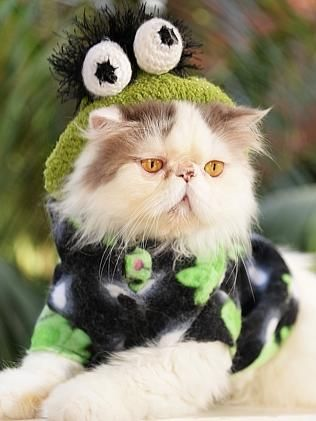 A Cat In An Oscar The Grouch Costume Is Adorable Cat