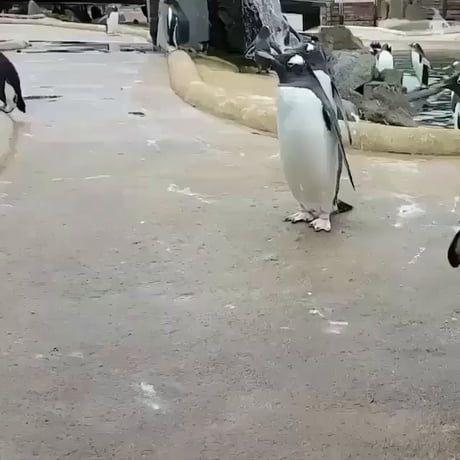 Happy, hoppy penguin