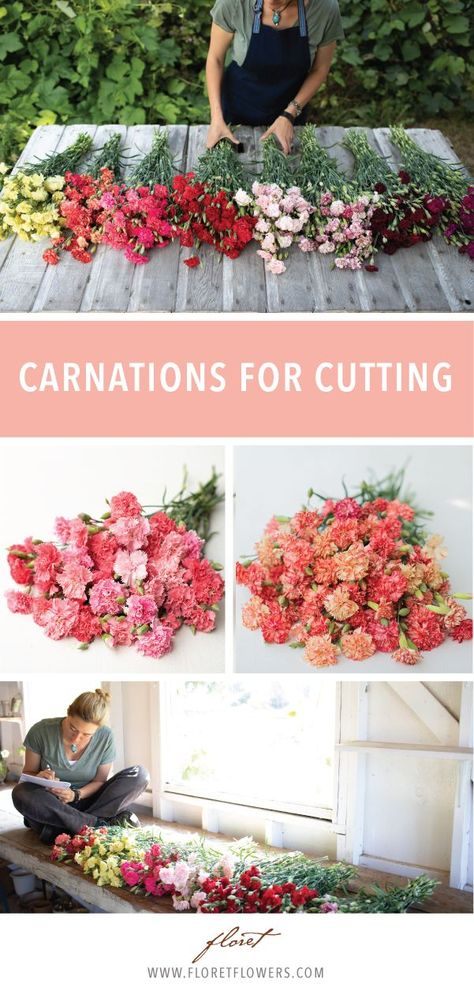 The long stems, sweet fragrance and extremely long vase life make carnations an ideal cut flower. Long Stem Flowers, Types Of Flowers, Growing Flowers, Cut Flowers, Planting Flowers, Potted Flowers, Cut Flower Garden, Flower Pots, Flower Pot Design