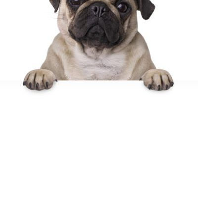 Dog Breed Selector What Breed Of Dog Should I Get Quiz Dog