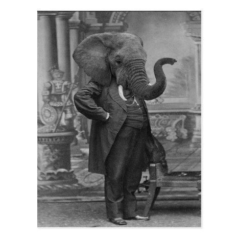 Vintage Victorian Man in Suit with Elephant Head Postcard | Zazzle.com |  Bear art, Elephant photography, Animals