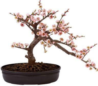Cherry Blossom Silk Bonsai Tree And Other Bonsai Trees To Decorate Your Home Bonsai Tree Silk Plants Bonsai Tree Tattoos