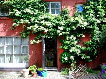 Hortensja Pnaca Hydrangea Petiolaris Outdoor Structures Hydrangea