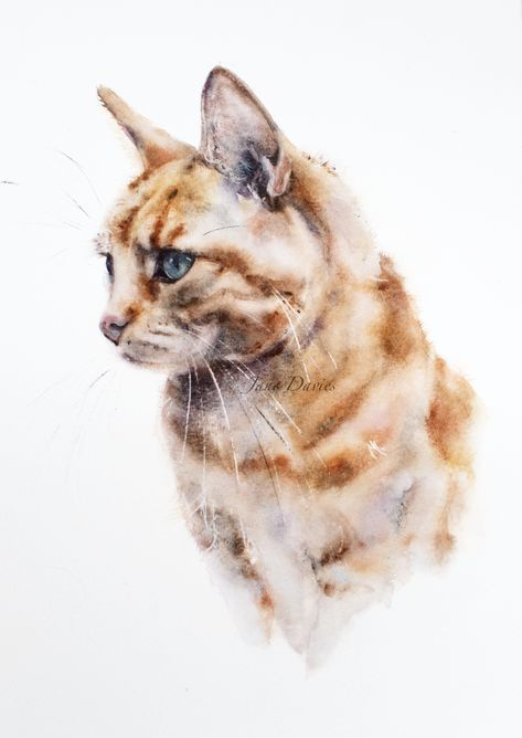 Pet portrait of a ginger cat, painted by watercolour artist Jane Davies