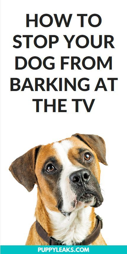 How I Stopped My Dog From Barking At The Tv Training Your Dog