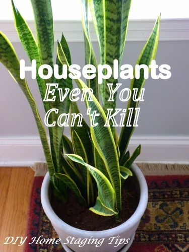 The Best Easy Care Indoor Plants For Homestaging Homestagingtips Easy Care Indoor Plants Indoor Plants Easy Plants Indoor Design