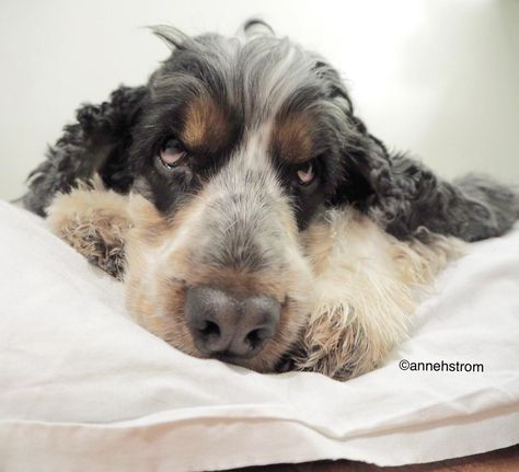 bestwoof Is it Monday again?...