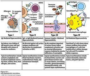papilom cancerigen tratament naturist pentru parazitii intestinali