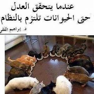 اقوال عن الرفق بالحيوان Yahoo Image Search Results Like A Cat Funny Animal Pictures Cute Animals