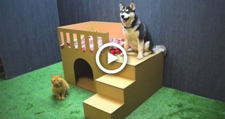 How To Make Puppy Dog House From Cardboard House Diy Dog House
