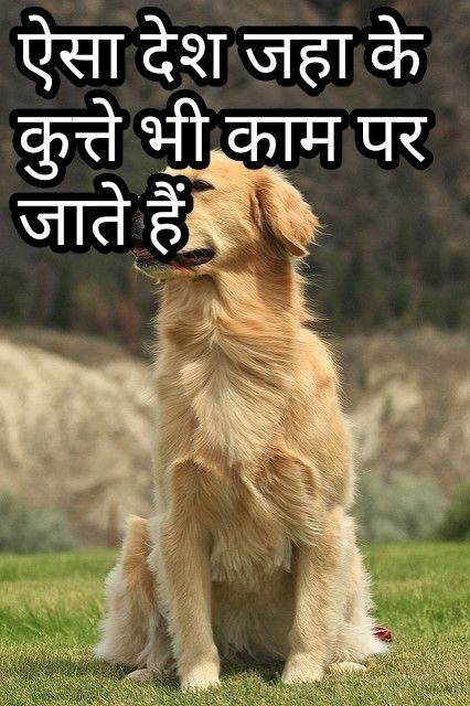 Pin By Love Expert Relationship Advice And Dating Tips On Hindi