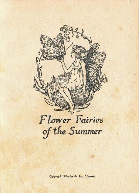 flower fairies of the summer by cicely mary barker, 1925 Vintage Fairies, Sketches, Art Inspo, Vintage Art, Illustration, Drawings, Art, Fairy Tales, Flower Fairies