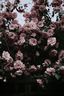 Photography Art Hipster Vintage Indie Black Grunge Dark Flowers Grunge Fashion Pink Flowers Dark Vin Flower Aesthetic Dark Flowers Aesthetic Photography Grunge
