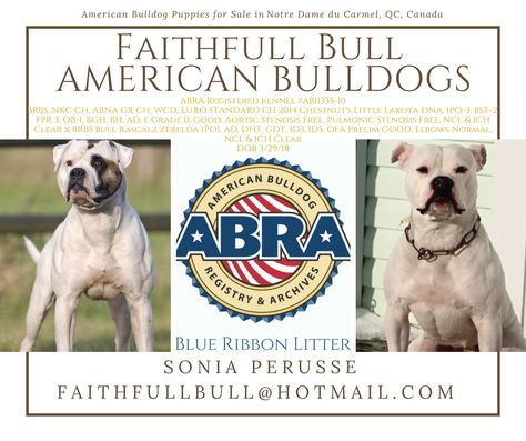 Abra Litter Of The Day Congratulations Sonia Blue Ribbon Litter
