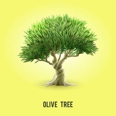 Olive Tree Vector Olive Tree Tree Olive