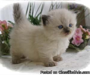 Rug Hugger Kitten Is This Not The Cutest Little Thing