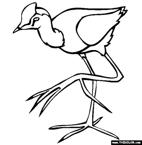 Comb Crested Jacana Coloring Page Free Comb Crested Jacana