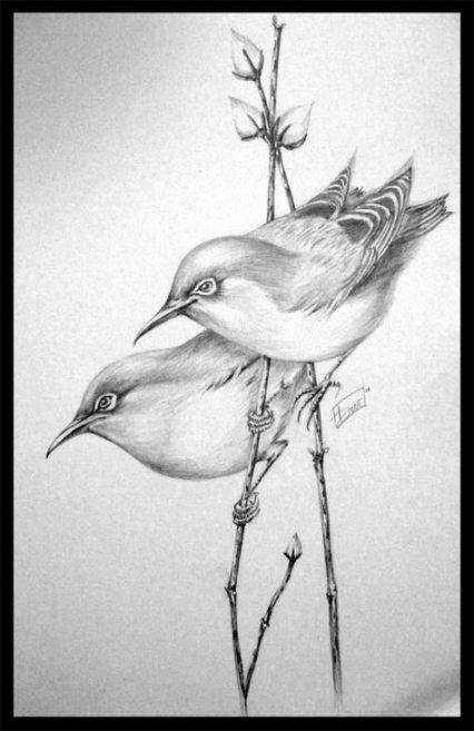 40 Super Ideas Bird Sketch Owl Pencil Drawings Of Nature Pencil Sketch Images Bird Sketch