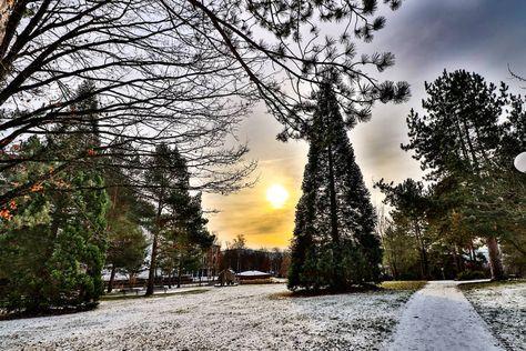 fotografie Ein guterRatist wie Schnee....